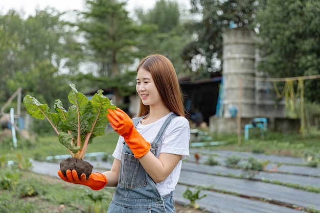 Vrouwelijke tuinman concept een vrouwelijke tuinier die de plant met één hand vasthoudt en de toestand van de bladeren van het groen controleert.