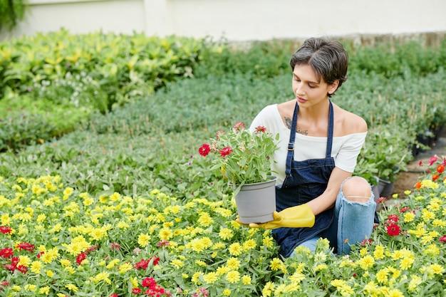 Vrouwelijke tuinman die bloeiende bloemen prikt