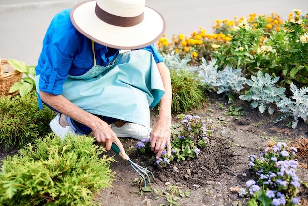 Vrouwelijke tuinman die bloemen plant