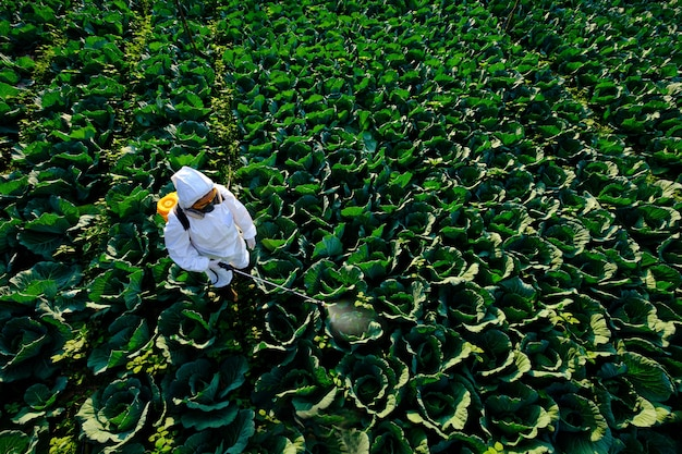 Vrouwelijke tuinman in een beschermend pak en masker spray insecticide en chemie op enorme koolgroenteplant