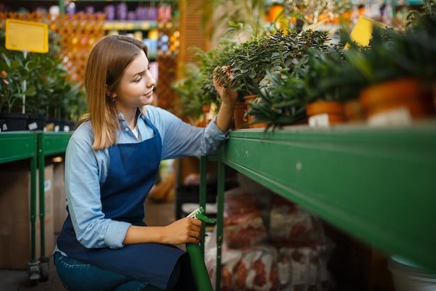 Vrouwelijke tuinman in schort zorgt voor planten in winkel voor tuinieren. vrouw verkoopt bloemen in petto voor bloementeelt