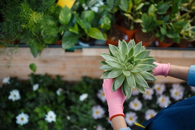 Vrouwelijke verkoper hand in handschoenen houdt plant in winkel voor tuinieren. vrouw in schort verkoopt bloemen in bloemistwinkel