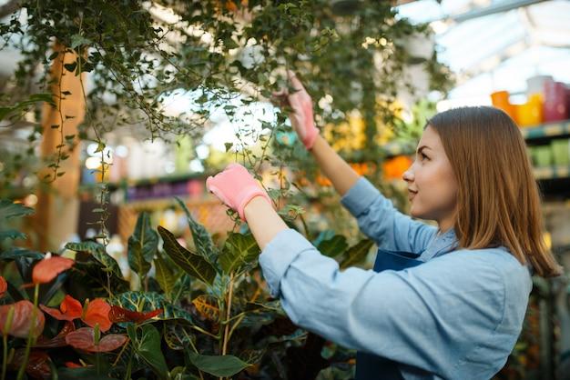Vrouwelijke verkoper sproeien planten in winkel voor tuinieren. vrouw in schort verkoopt bloemen in bloemistwinkel, bloementeelt