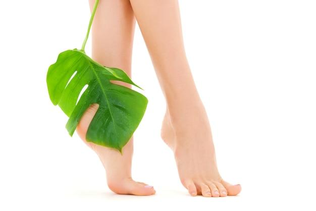 Vrouwelijke voeten met groen blad over wit