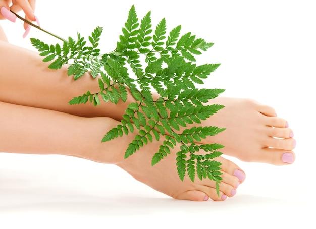 Vrouwelijke voeten met groen varenblad over wit