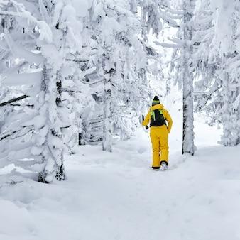 Vrouwelijke wandelaar die door een besneeuwd winterbos loopt en naar een draagbare computer kijkt