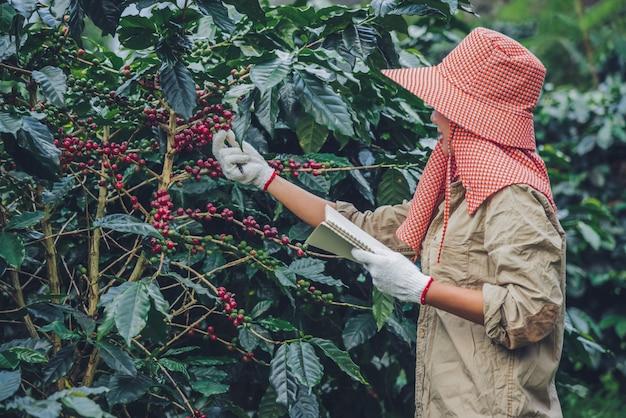 Vrouwelijke werknemers schrijven een verslag van de groei van koffiebomen. landbouw, koffietuin.