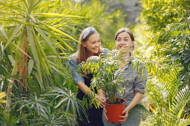 Vrouwen die in een kas werken met bloempotten