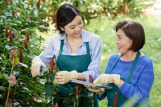 Vrouwen die in een tuin werken