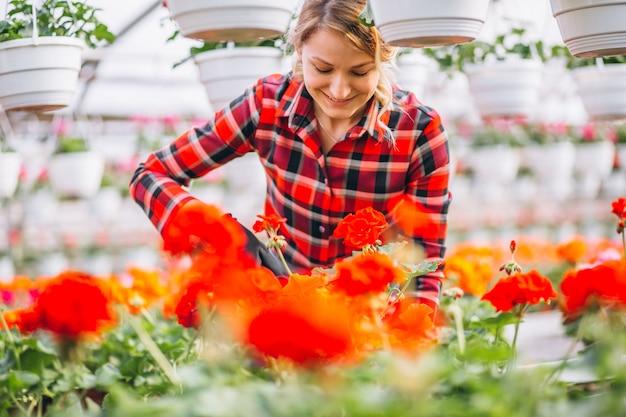 Vrouwen gardner die voor bloemen in een serre zorgen