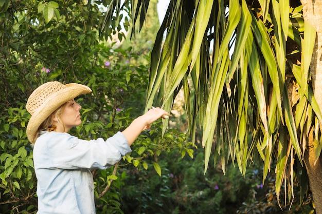 Vrouwen scherpe bladeren van boom
