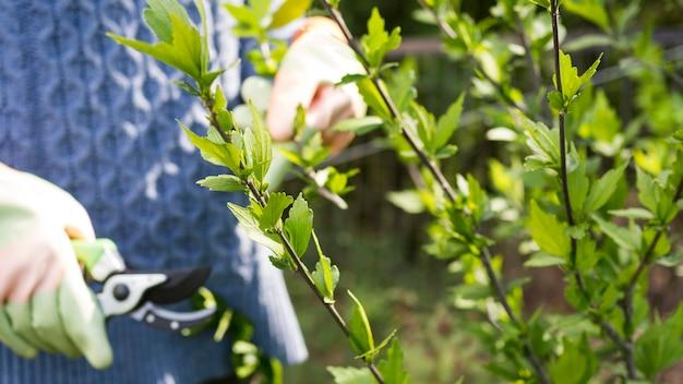 Vrouwen scherpe bladeren van haar tuinclose-up