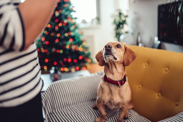 Vrouwen voedende hond die geweitakken draagt
