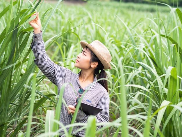 Vrouwenboer die een slim apparaat vasthoudt en suikerrietblad controleert, slimme boer die op de boerderij werkt