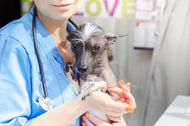 Vrouwendierenarts van middelbare leeftijd onderzoekt de hond. artsenpraktijk, laptop, medische apparatuur.