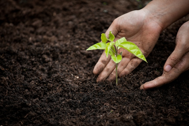 Vrouwenhand die jonge boom op zwarte grond planten als bewaar wereldconcept