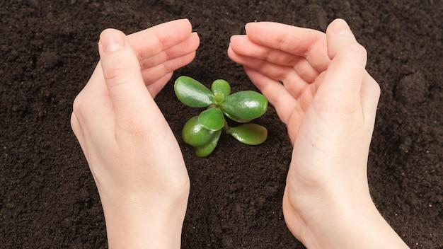 Vrouwenhand die jonge groene spruit in de grond houden.