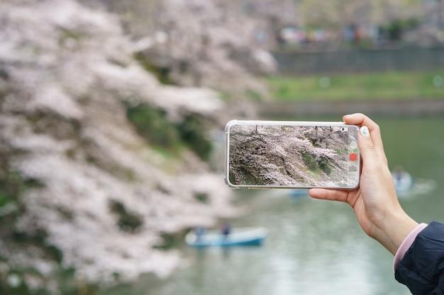 Vrouwenhand die mobiele telefoon houden die een foto met japanse kersenbloesems of sakura bekijken.