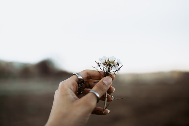 Vrouwenhand met ringen die wilde witte bloemen vangen bij zonsondergang in de lente