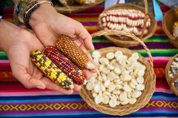Vrouwenhanden die de verschillende soorten peruaanse maïs tonen op een landbouwbeurs, heilige vallei van de inca's. urubamba peru.