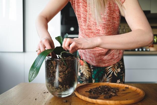 Vrouwenhanden die een bloem in het huis planten