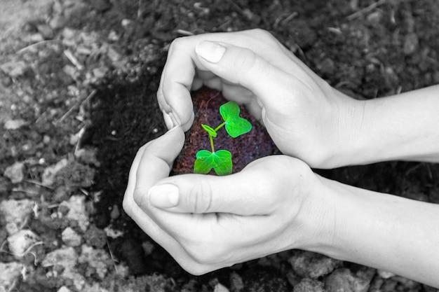 Vrouwenhanden houden de grond vast met een spruit. de vorm van een hart. concept van ecologie en aarde dag. zwart-witte kleuren.