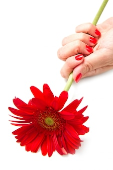 Vrouwenhanden met rode manicure en rode bloem