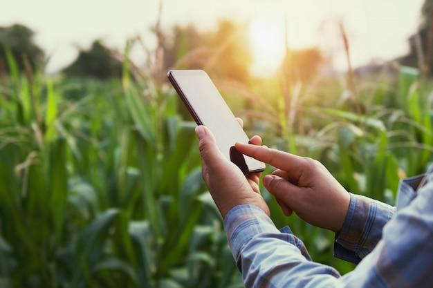 Vrouwenlandbouwer die technologie mobiel op graangebied gebruiken