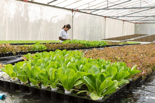 Vrouwenlandbouwer in groentenhydrocultuurlandbouwbedrijf