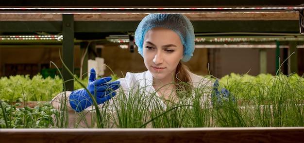 Vrouwentuinders houden groen op een hydrocultuurboerderij en observeren het groeigroen nauwgezet voordat het bij de klant wordt afgeleverd. hydrocultuur groen groeit in hydrocultuur boerderij.