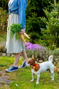 Vrouwtje houdt bieten in de buurt van een hond in een tuin in het voorjaar