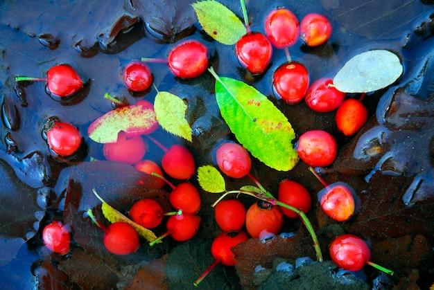 Vruchten van een wilde roos (rosa canina) in het water gevallen