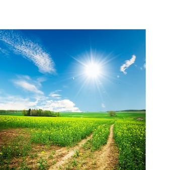 Vuil weg in een zonnige dag