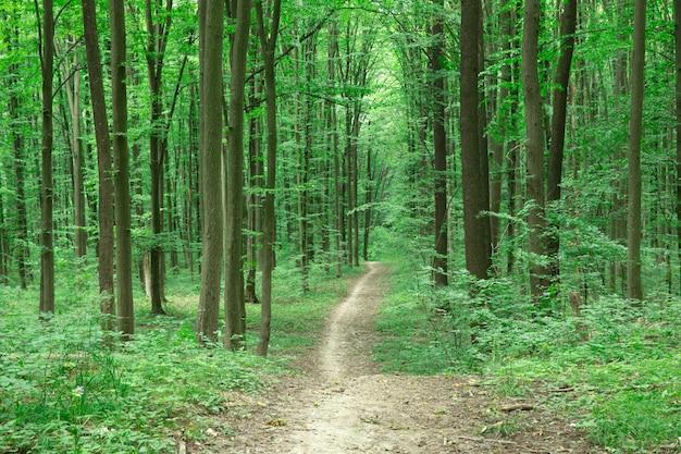 Vuil weg op groen bos