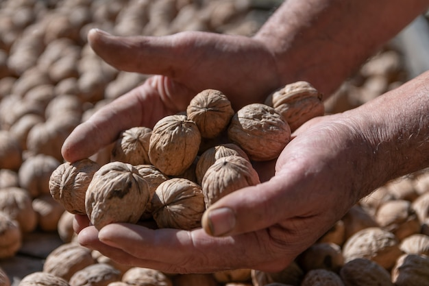 Vuile handen vol walnoten