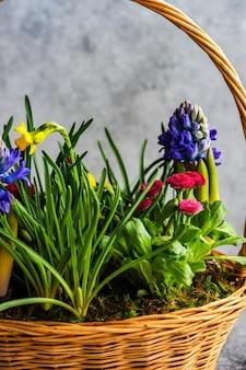 Vuist lentebloemen in bloemensamenstelling voor interieurdecoratie