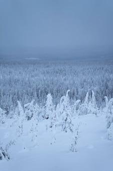 Vuren bomen vallende sneeuw op riisitunturi national park, finland