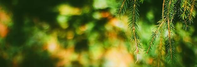 Vuren boomtakken als abstracte aardachtergrond en natuurlijk milieuconcept