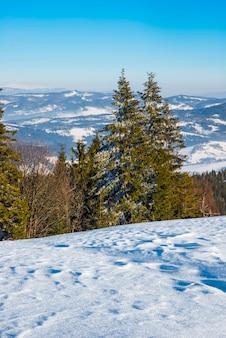 Vuren winterbos met uitzicht op de bergen. prachtige winter natuur. karpaten in de muur.