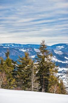 Vuren winterbos met uitzicht op de bergen. prachtige winter natuur. karpatische bergen