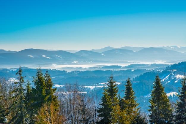 Vuren winterbos met uitzicht op de bergen