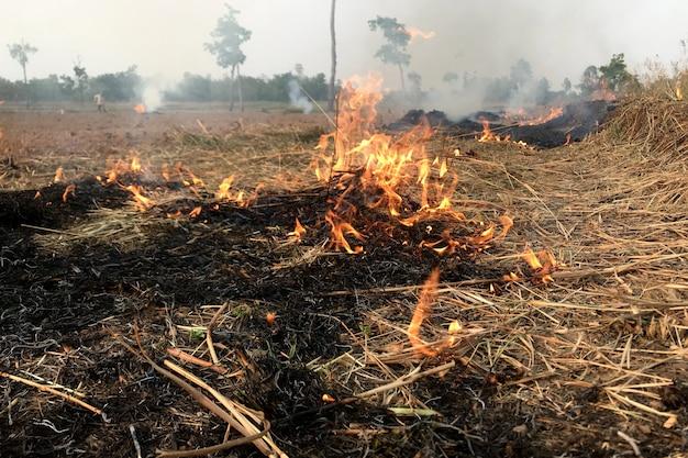 Vuur brandt hooi in het droge seizoen.