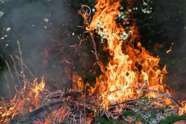 Vuur in het bos is veel rook en vuur.