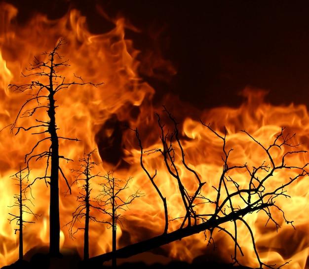Vuur in hout