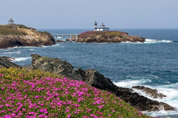 Vuurtoren van pancha-eiland in ribadeo met voorgrond van violette bloemen in zonnige dag ribadeo