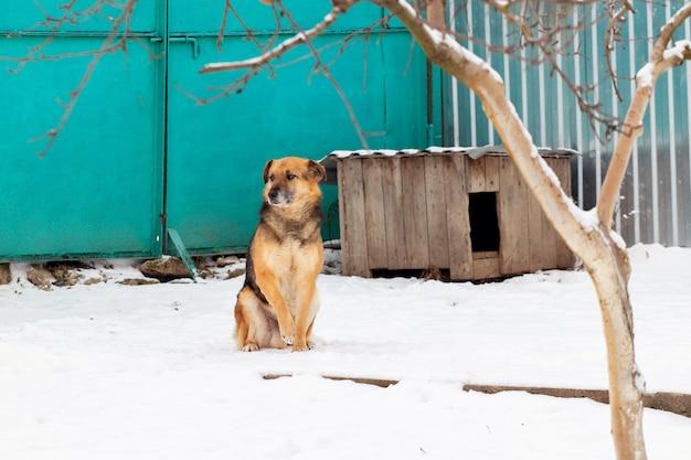 Waakhond in de buurt van de kennel in de winter zittend in de sneeuw
