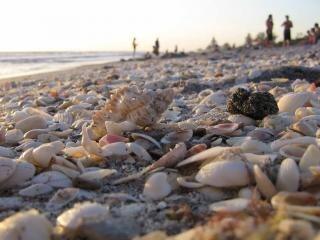 Waar de tank voldoet aan het zand