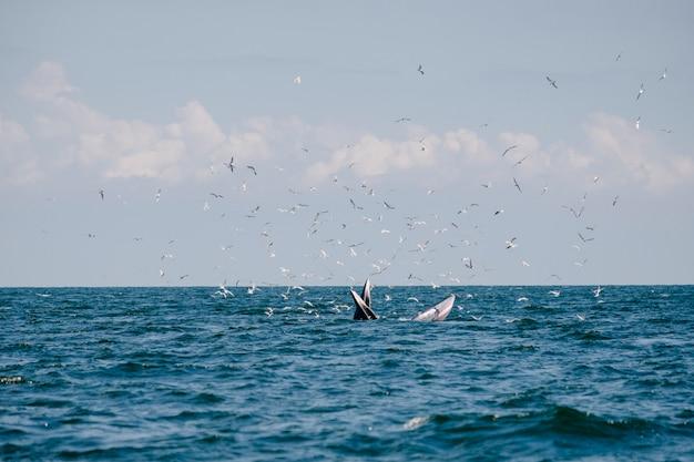 Walvis in zee
