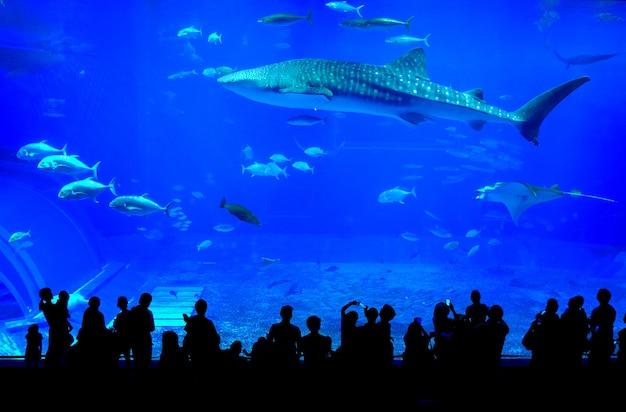 Walvishaai in het churaumi-aquarium van okinawa in japan