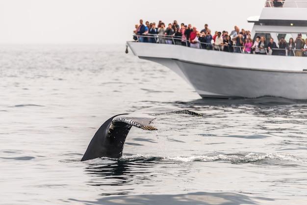 Walvisvangst in de oceaan
